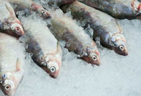 Seis tips para identificar el pescado fresco