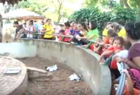 Para celebrar el Día del Niño, el Zoo Municipal habilita entradas 2x1 para todos los niños.